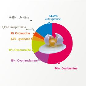 Extrait d'infographie sur l'œuf