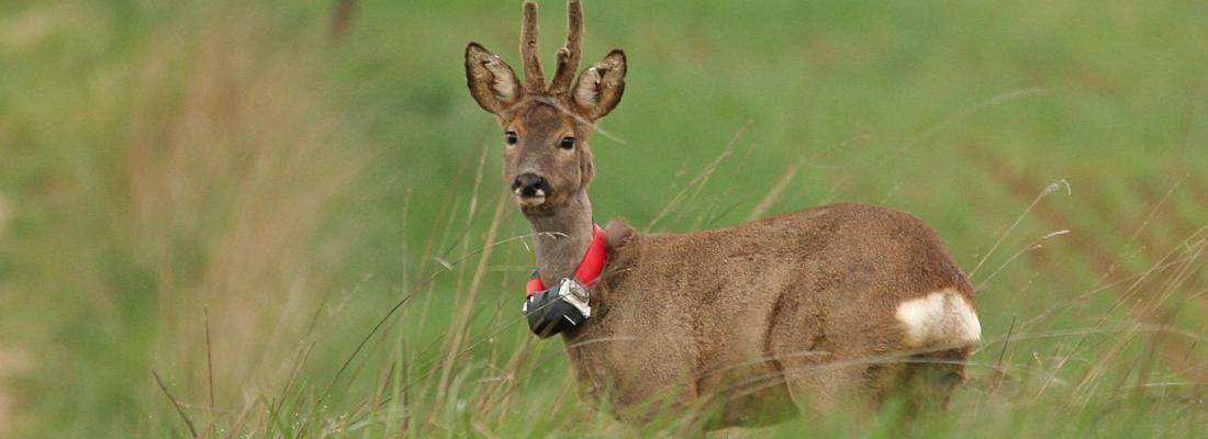 illustration Mieux comprendre les populations d'animaux sauvages grâce aux nouvelles technologies