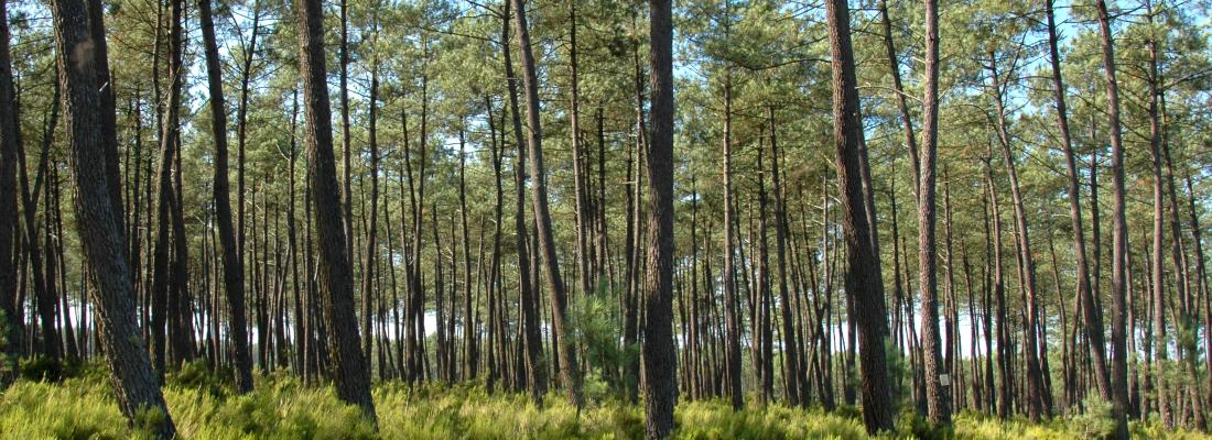 illustration La recherche internationale mobilisée pour concevoir les forêts de demain