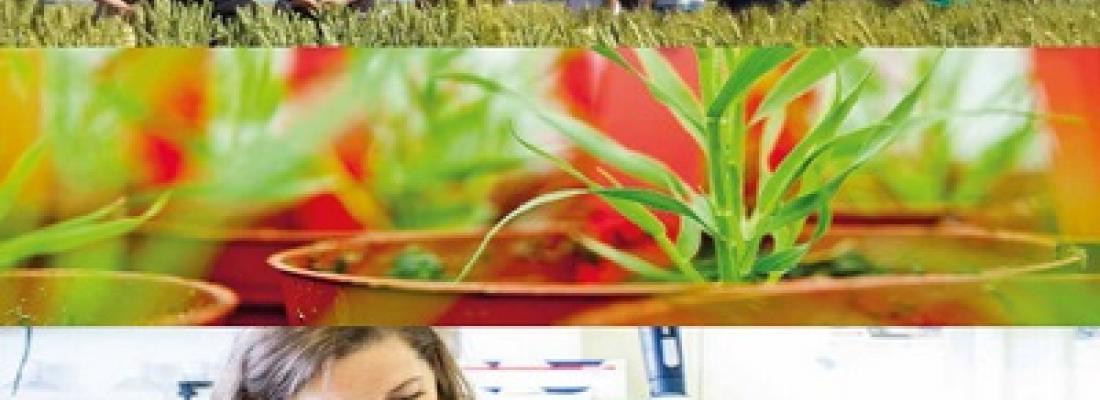 illustration Un nouveau pas en matière de recherche pour développer les alternatives aux produits phytosanitaires