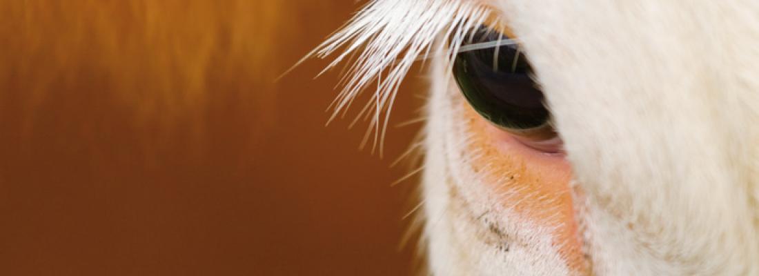 illustration Conscience animale : des connaissances nouvelles