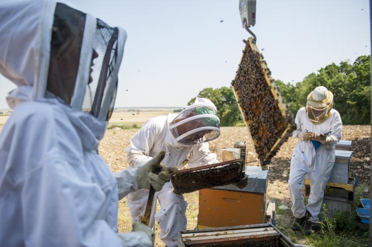 Ecobee-Abeilles, Poitou-Charente. Ecobee : un dispositif d'observation des abeilles en milieu ouvert. Ecobee est un outil original pour mener des expérimentations en plaine céréalière sur les interactions entre les caractéristiques des colonies, celles des paysages et les contraintes environnementales.