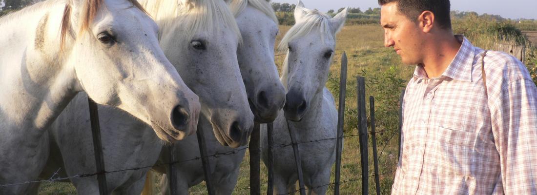 illustration Vivre et travailler avec les chevaux