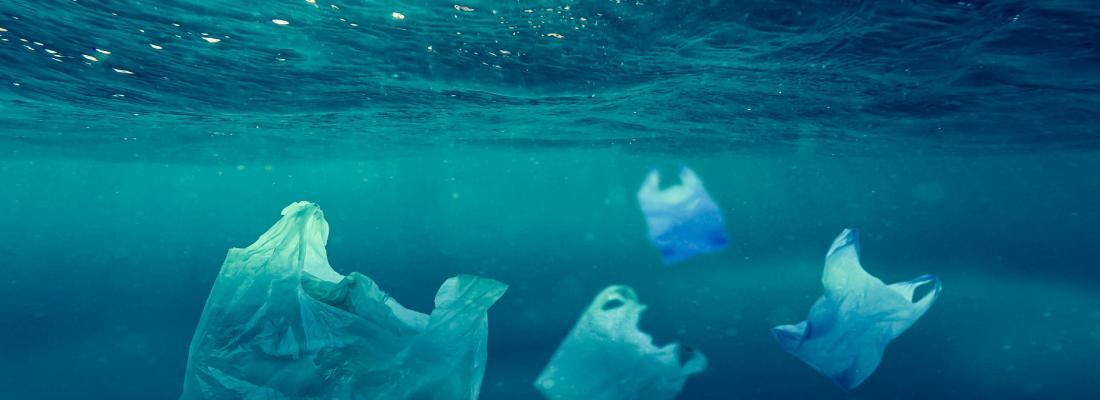 illustration Microplastiques dans les océans : leur ingestion chronique perturbe la croissance et la reproduction des poissons