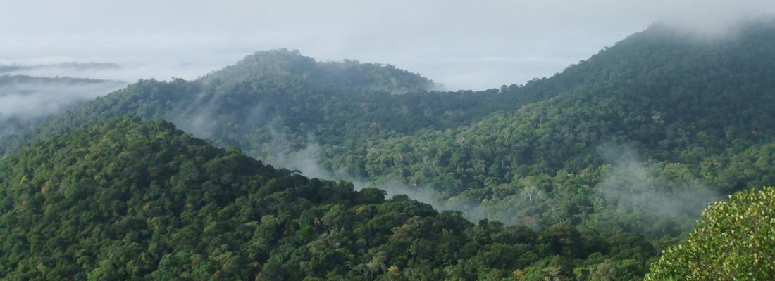 illustration Les forêts tropicales africaines n'ont pas récupéré après l'épisode extrême El Niño de 2015-2016