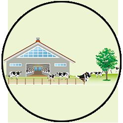 Faut-il consommer de la viande : 80 % des terres agricoles utilisées pour l'élevage sont des prairies