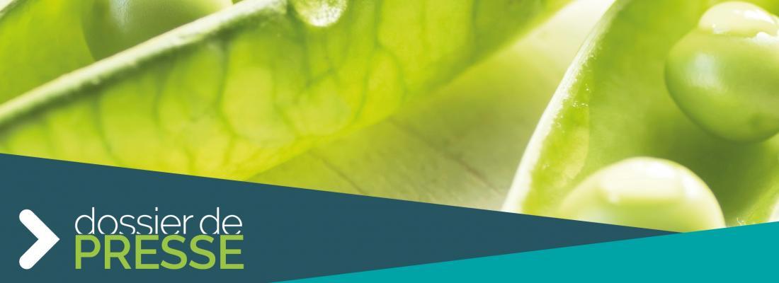 illustration Les racines d'une alimentation durable : quand les protéines végétales s'invitent à table