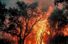 Forest fire in the Massif des Maures in 2007