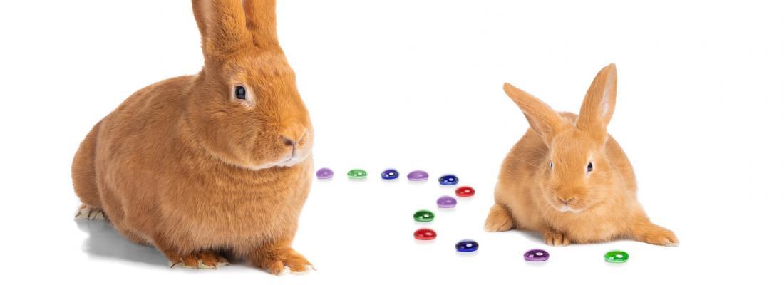 illustration Mieux comprendre l'hérédité pour optimiser la sélection des animaux d'élevage