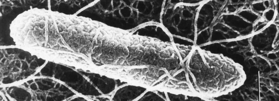 illustration Comprendre comment les bactéries s'adaptent à leur environnement