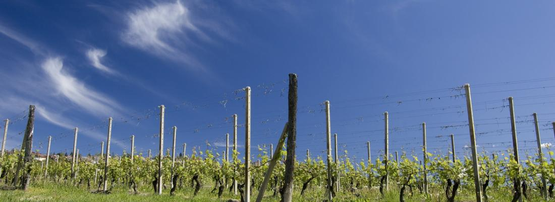 illustration From vine to wineglass: helping every actor adapt to the effects of climate change