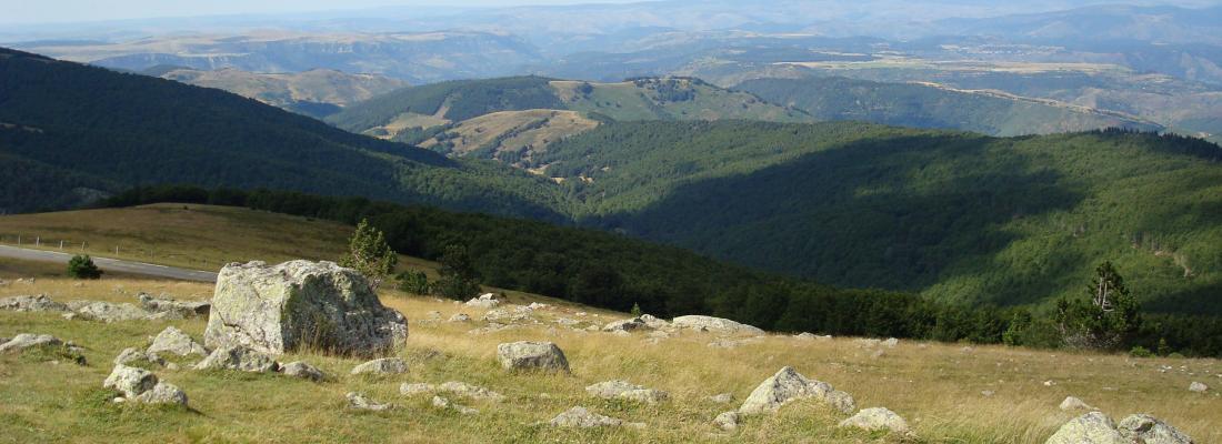 illustration Le reboisement spontané de nos montagnes… bon ou mauvais pour la biodiversité ?
