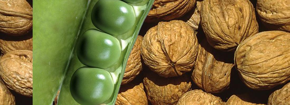 illustration Les co-produits agricoles, des sources de molécules d'intérêt