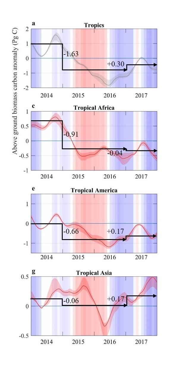 Evolution des stocks de carbone dans la biomasse aérienne de la végétation, estimée à partir de l'index L-VOD dans les régions tropicales sur la période 2014-2017.