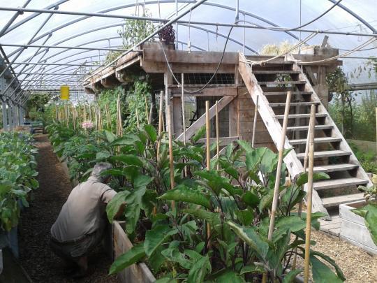 Ferme de Bec Hellouin (Eure).  Vue de la serre, avec un poulailler installé en terrasse, donnant de la chaleur aux cultures situées en dessous.