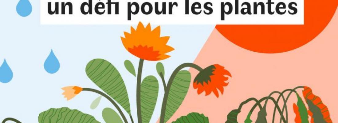 illustration Le dérèglement climatique : un défi pour les plantes