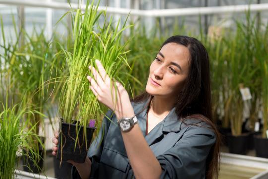 illustration  Stella Césari, une jeune chercheuse récompensée pour son travail en science du végétal