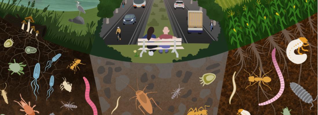 illustration Journée mondiale des sols