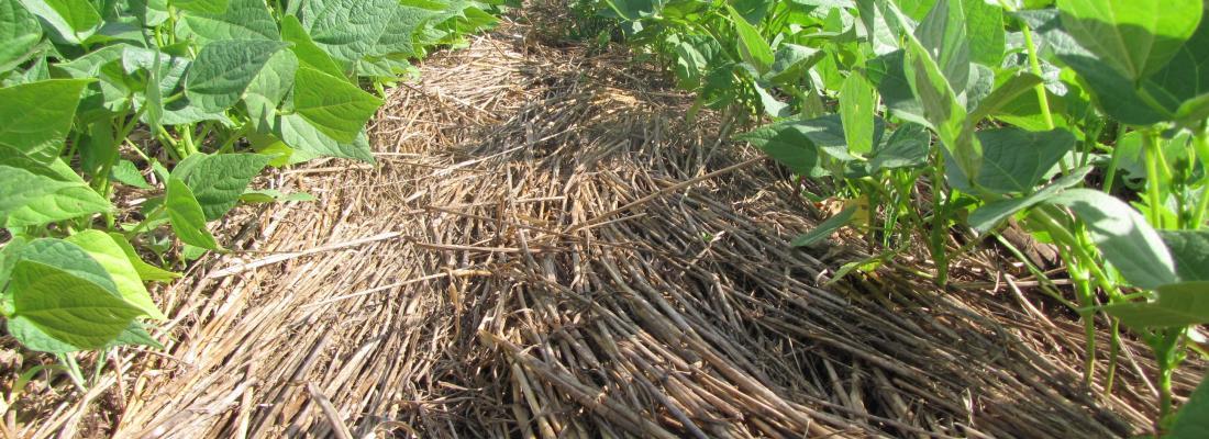 illustration  Des résultats originaux : la décomposition des mulch