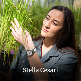 Stella Césari