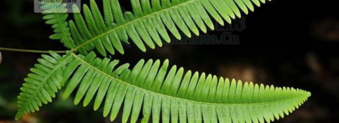 illustration Extraire des terres rares avec des plantes