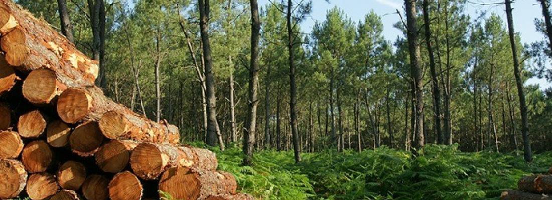 illustration Gérer les forêts de manière durable : une nécessité urgente