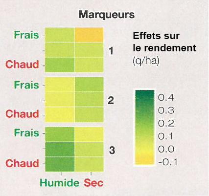 Effets sur le rendement de 3 régions génomiques du maïs