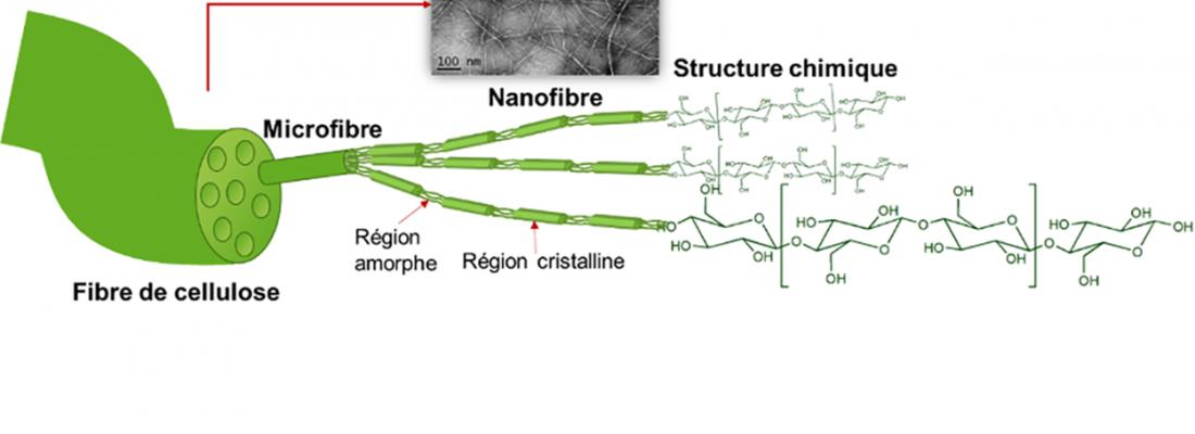 Structure hiérarchique de la fibre de cellulose et images TEM des nanofibres et des nanocristaux de cellulose
