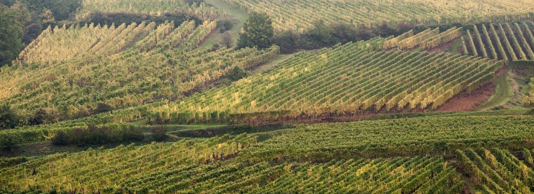 illustration Pratiques agricoles et biodiversité dans les paysages viticoles