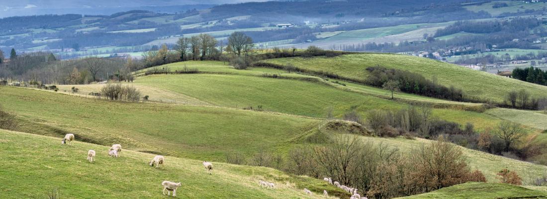 illustration REPLAY-Les prospectives agricoles pour la région Occitanie : quels enjeux pour la recherche ?