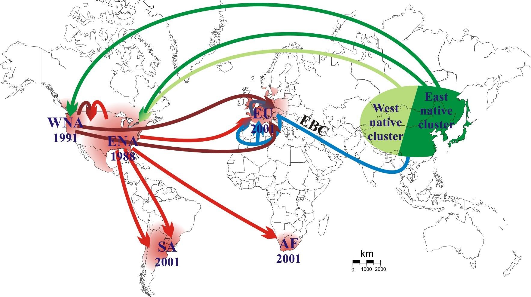 Routes d'invasion les plus probables de la coccinelle asiatique