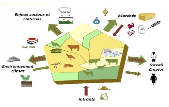 Grange Esco Elevage européen : territoire culture-élevage