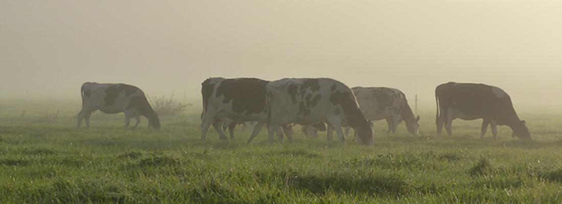 illustration  Rôles, impacts et services issus des élevages européens