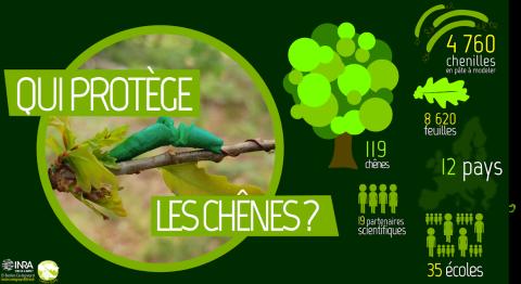 Chiffres du projet : 4760 chenilles, 8620 feuilles, 119 chenes, 12 pays, 19 partenaires, 35 écoles