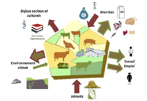 Grange Esco Elevage européen : territoire dense en animaux