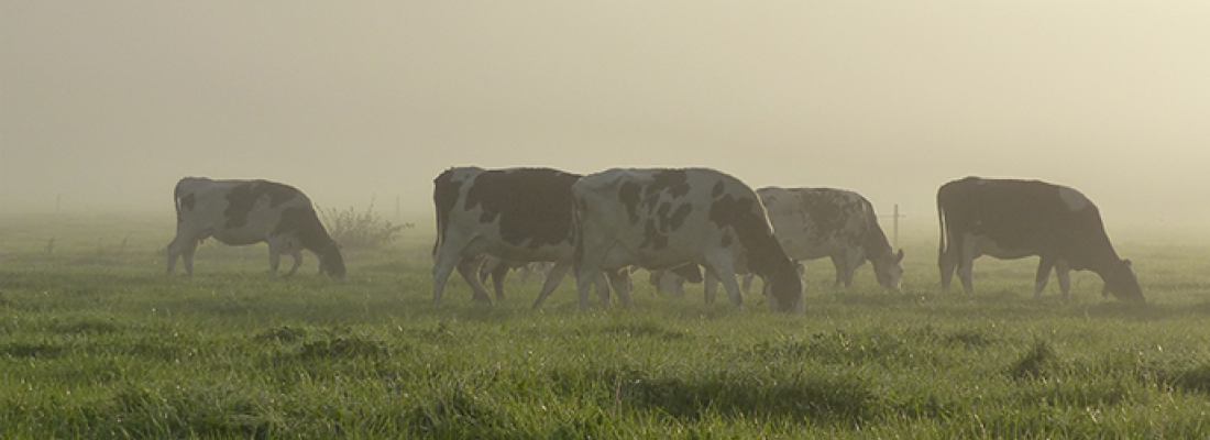 illustration  Roles, impacts and services provided by European livestock production