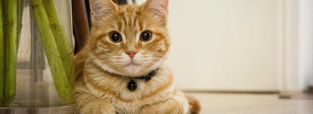 illustration Premier chat détecté porteur du SRAS-Cov-2 en France : la transmission de l'humain au chat est rare mais la distanciation est recommandée