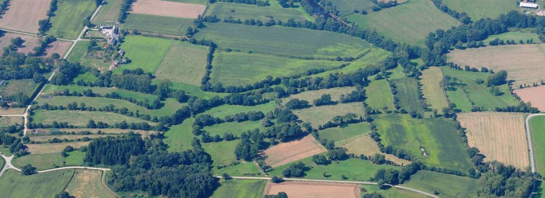 illustration Des parcelles plus petites et plus diversifiées favorisent la diversité des plantes jusqu'au centre des champs