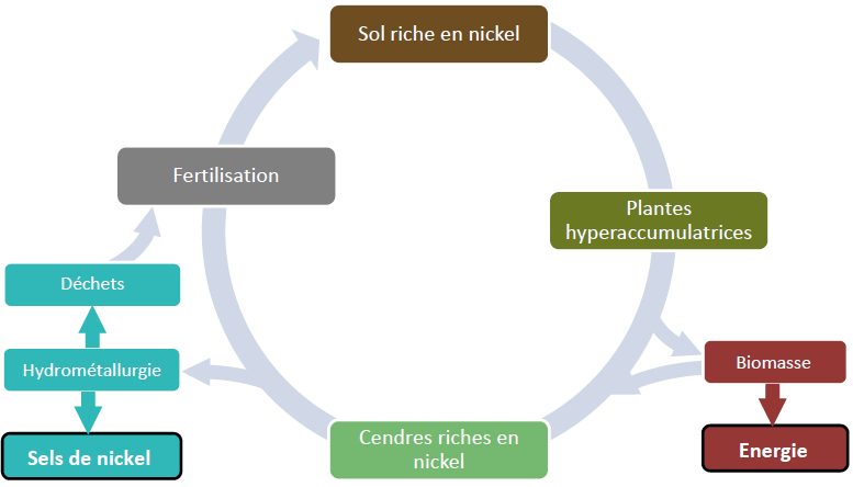 Cycle de l'agromine nickel