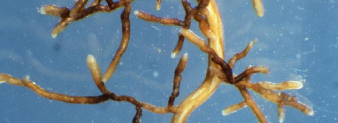 illustration Une bactérie du sol championne de l'évolution rapide