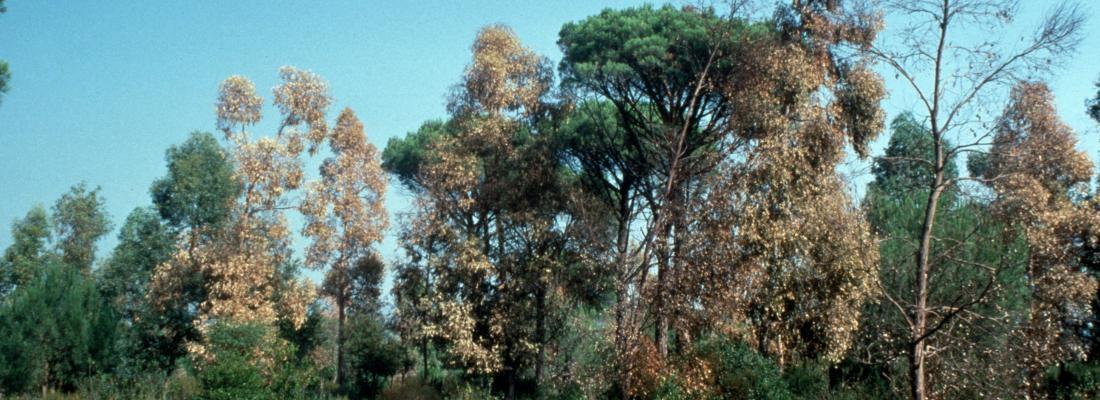 illustration Anticiper les effets du changement climatique pour adapter les forêts