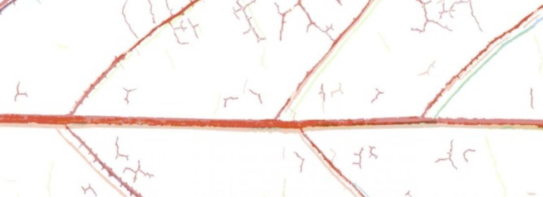 illustration Nouvelle technique optique de visualisation de l'embolie chez les plantes