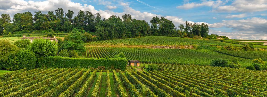 illustration Nouveau partenariat INRAE - IFV : la recherche et l'innovation pour préparer la viticulture de demain