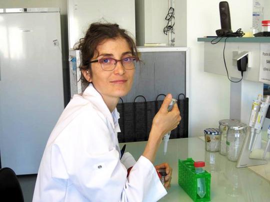 illustration Claudia Bartoli, le microbiote des plantes