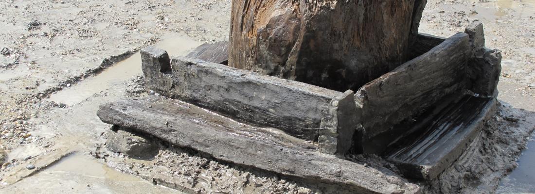 illustration Séquençage ADN haut débit des bois anciens : une nouvelle méthode pour explorer l'évolution des forêts