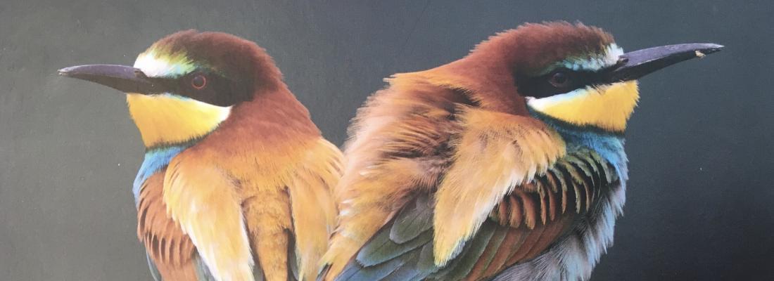 illustration Parution ouvrage Quae - Oiseaux sentinelles de la nature