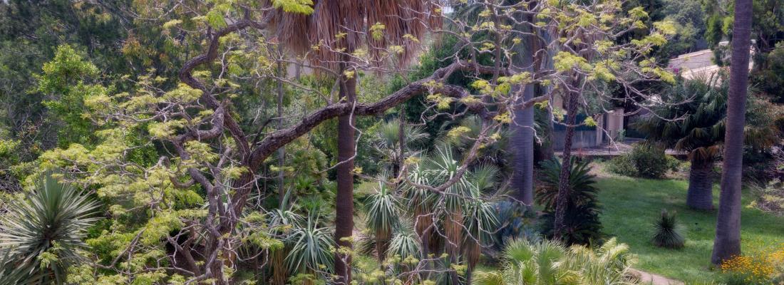 illustration  Quelques patrons d'organisation servent de modèles à plus de 46 000 espèces de plantes