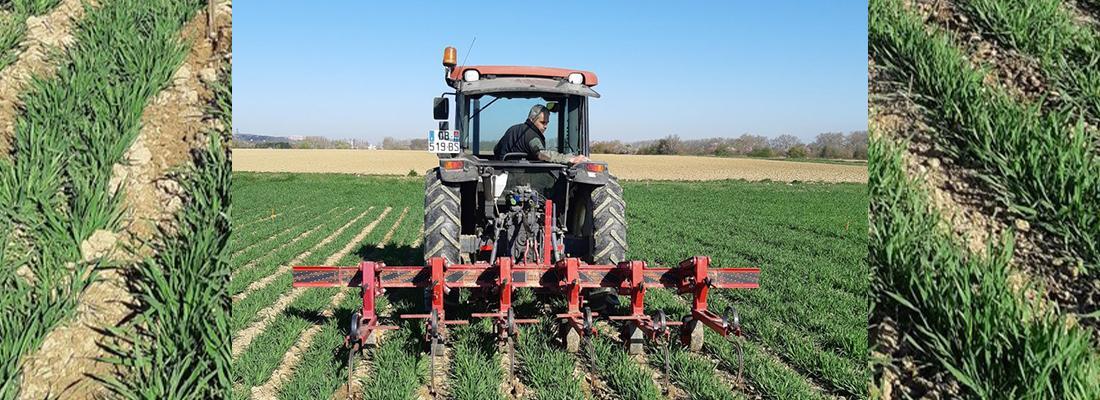 illustration REDUCE - Un projet pour réduire l'usage des pesticides en agriculture !