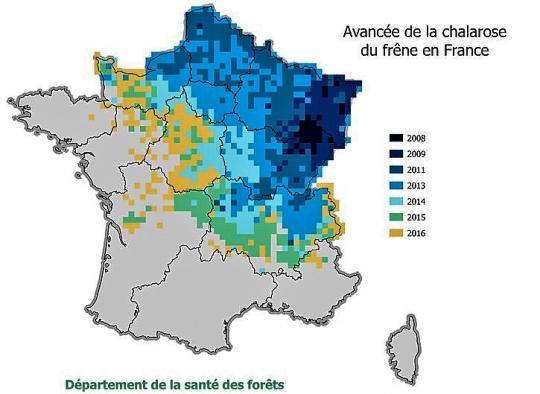 Avancée de la chalarose du frêne en France (Source : Département Santé des Forêts)