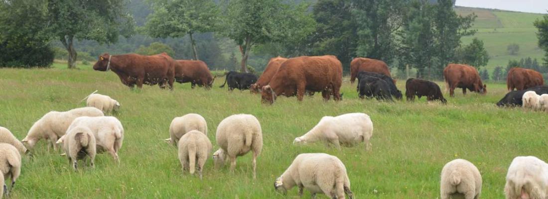 illustration La diversité des exploitations d'herbivores  : une opportunité pour l'élevage régional
